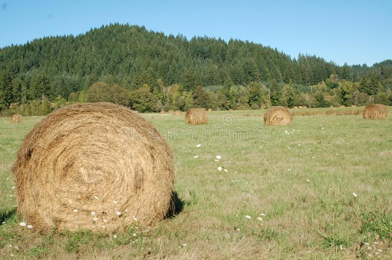 Rolled bales of hay in Oregon`s Willamette Valley. These are rolled bales of hay in a field in Oregon`s Willamette Valley stock photo