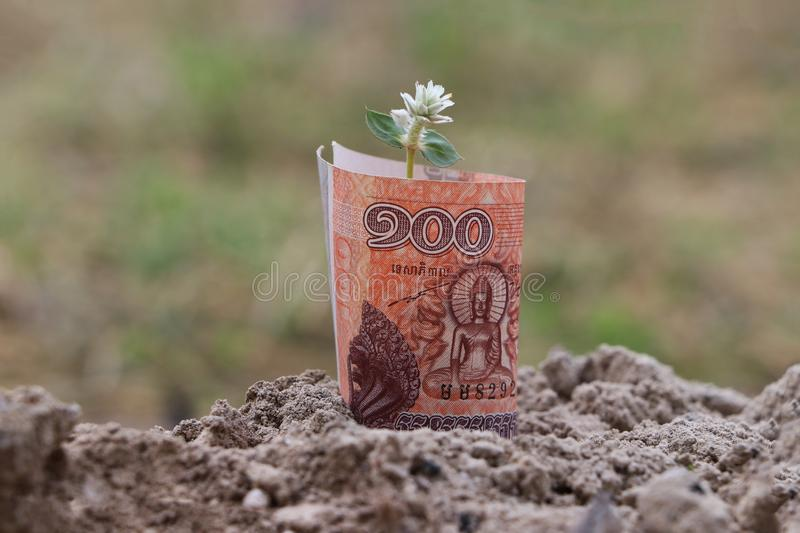 Rolled banknote money one hundred Cambodian Riel and young plant grow up from the soil. Concept of money growth or currency interest royalty free stock photography