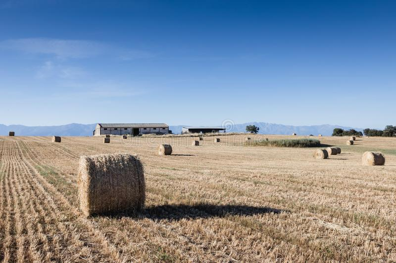 Rolled crop straw in the dry field stock photography