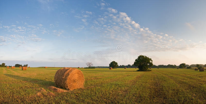 Rolled grass royalty free stock photo