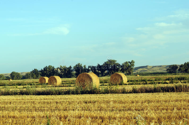 Download Rolled hay stock photo. Image of country, land, outside - 26833918