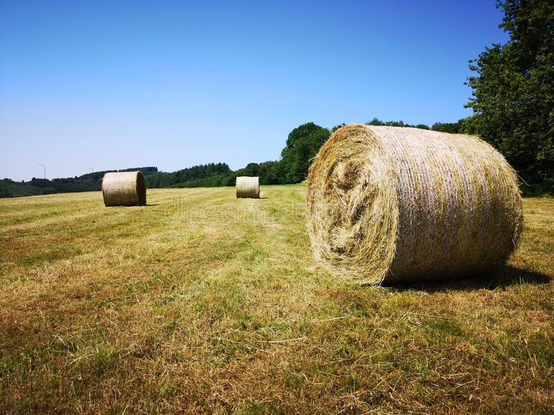 Rolled hay bales on a pasture with blue sky stock photography