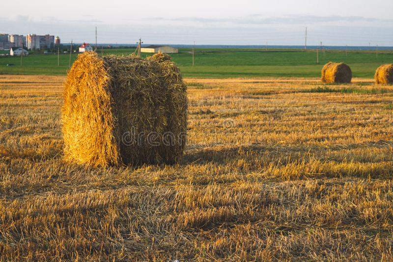 Rolled haystack. hay bale. agriculture field with sky. rural landscape. straw on the meadow. harvest in summer. Farm in the countryside, farmland, nature royalty free stock image