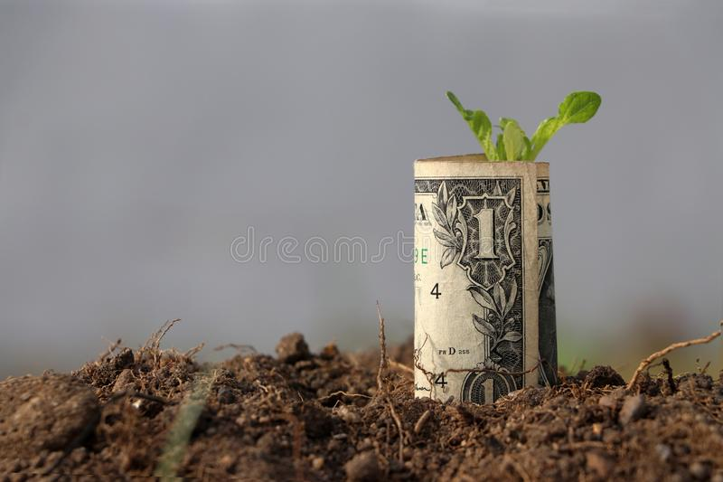 Rolled one US dollar banknote of America and young plant grow up from the soil. Concept of money growth or currency interest stock image