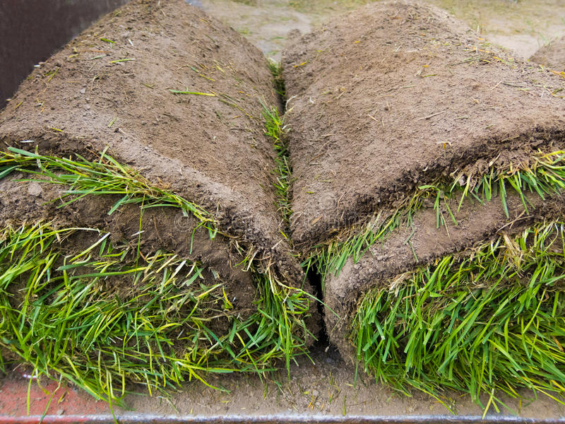 Rolled sod, closeup. Rolled pieces of sod in truck, closeup royalty free stock image