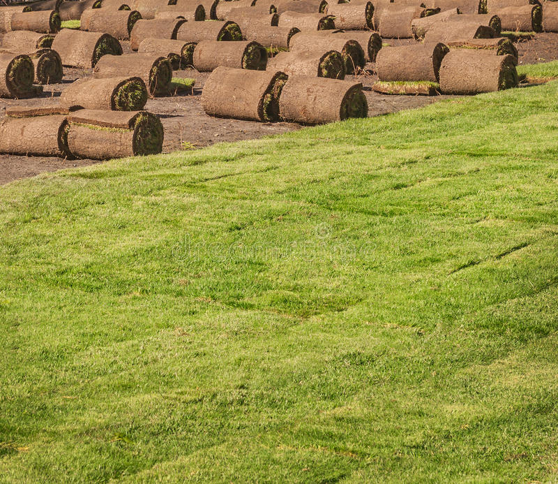 Rolled sod for new lawn. Bookmark the new lawn in the park on a sunny spring day stock photos