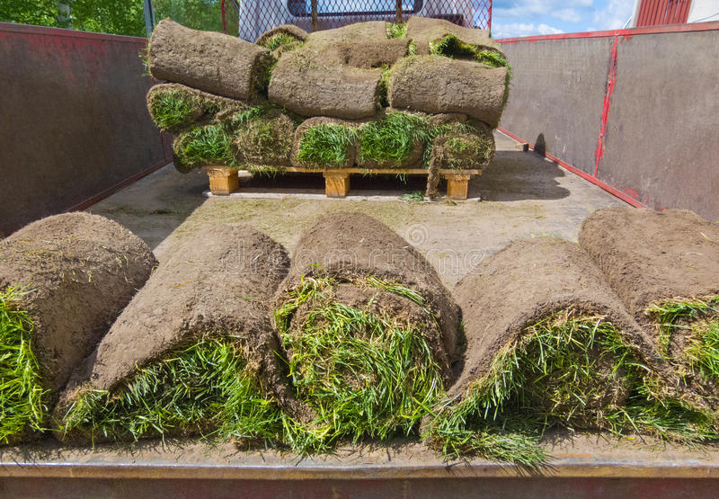 Rolled sod in truck, closeup. Rolled pieces of sod in truck, closeup royalty free stock photography