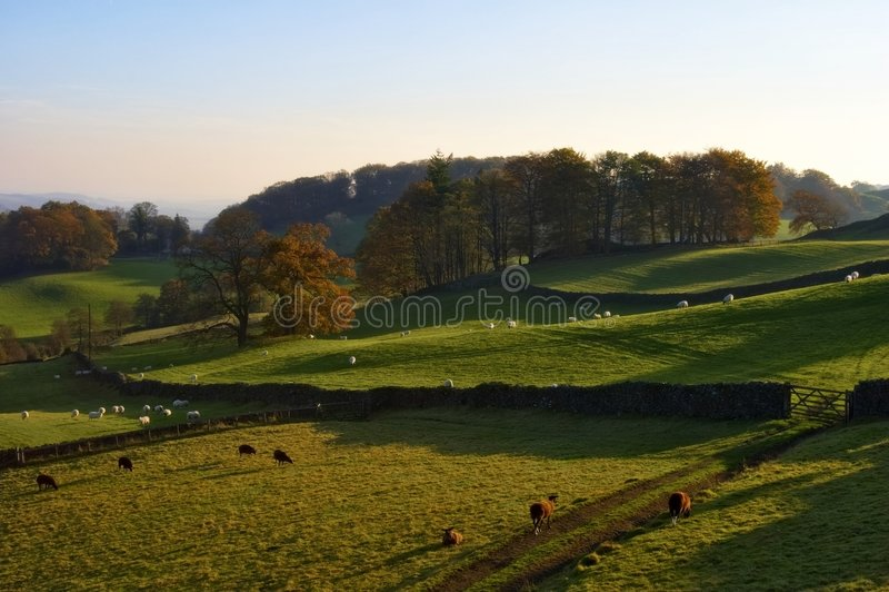 Rollende englische Landschaft im Herbst stockbilder