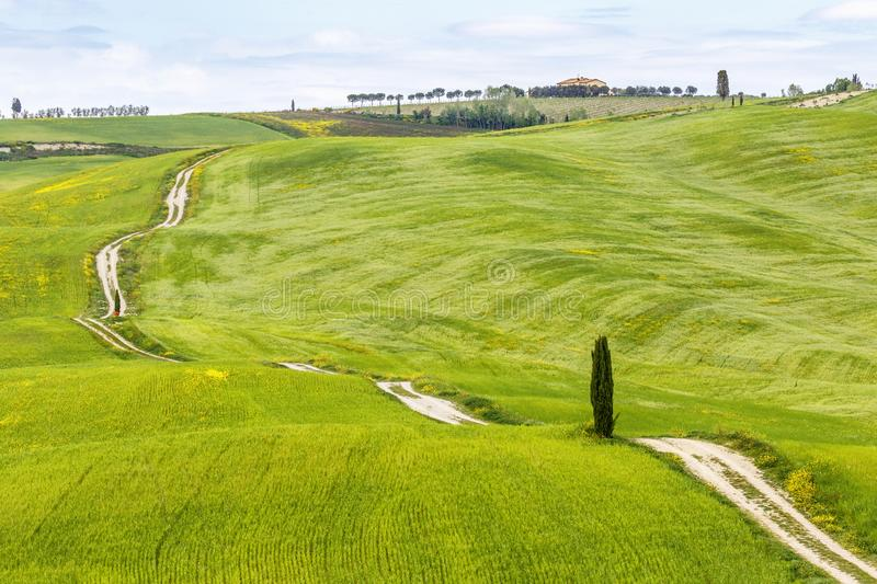 Rolling agricultural landscape with a dirt road across the fields. An a cypress tree royalty free stock photos