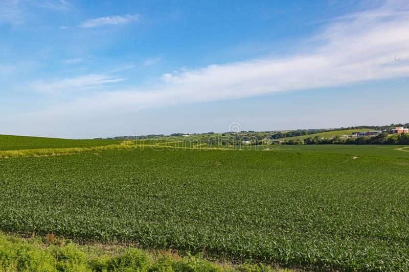 Rolling field of Young corn field somewhere in Omaha Nebraska. Rolling field of Young corn farm somewhere in Omaha Nebraska. Beautiful blue sky royalty free stock photos