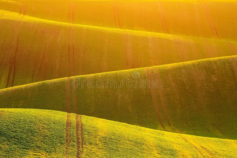 Rolling fields acting on man like huge green waves of stormy sea. Golden ground royalty free stock images