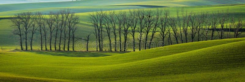 Rolling Gebieden van Moravian Toscany dichtbij Kyjov, Czechia royalty-vrije stock fotografie