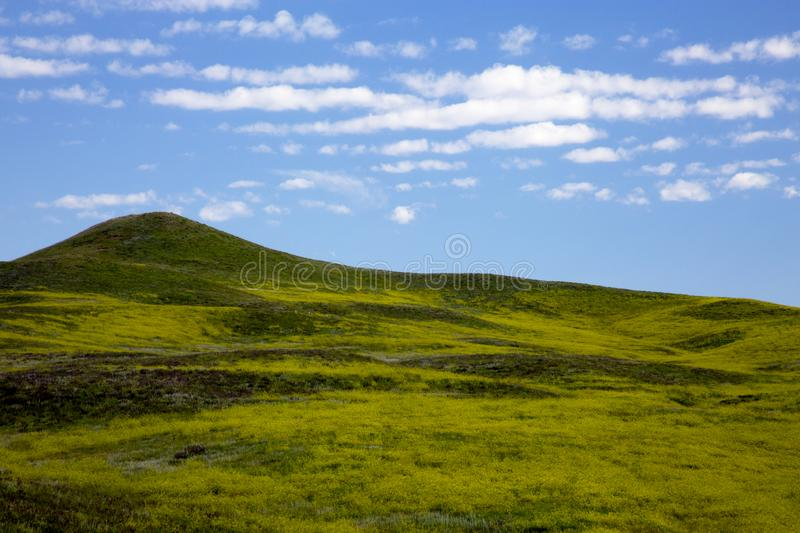 Rolling Green Hills at Custer State Park in South Dakota stock images