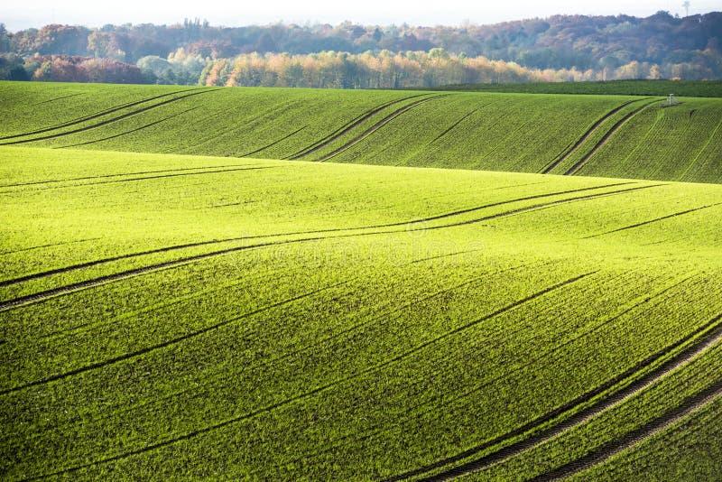 Rolling heuvels in de herfst Stajerska, Slovenië royalty-vrije stock afbeeldingen