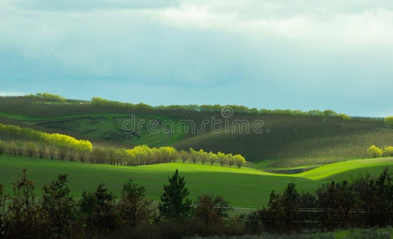 Rolling heuvels met boomgaard stock afbeeldingen
