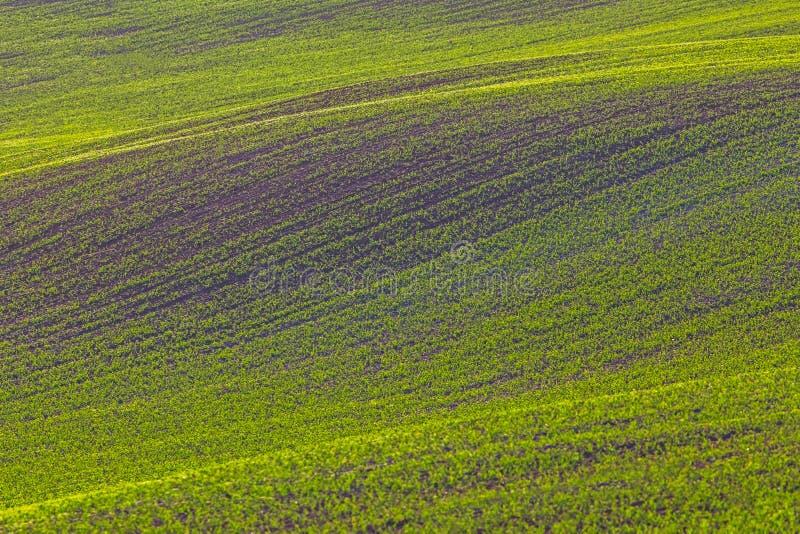 Rolling heuvels van groene tarwegebieden Verbazend fee minimalistic landschap met golvenheuvels, rollende heuvels Samenvatting stock afbeelding