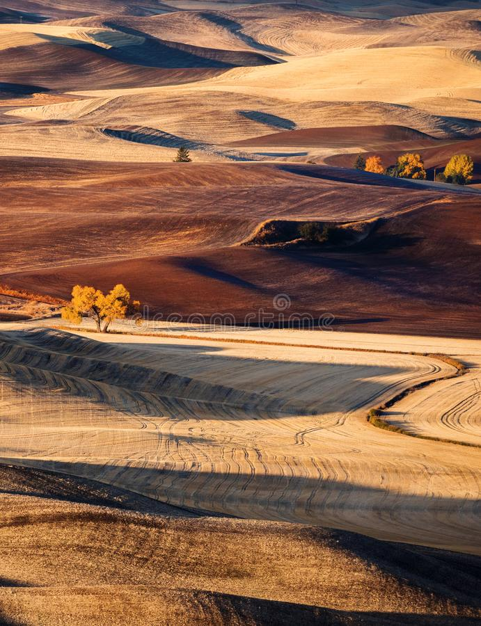 Rolling hills. Rolling hill in the fall of the farmlands in Palouse, Washington