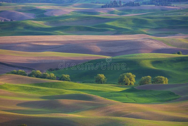 Rolling Hills в зоне Palouse штата Вашингтона стоковое изображение