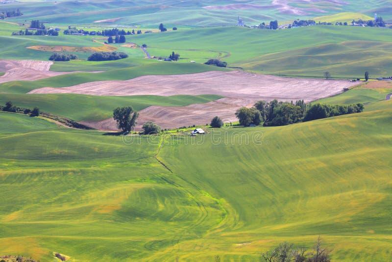 Rolling Hills в штате Вашингтоне стоковая фотография rf