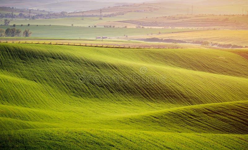 Rolling Hills зеленых пшеничных полей Изумляя ландшафт феи minimalistic с холмами волн, Rolling Hills Абстрактная природа стоковая фотография rf