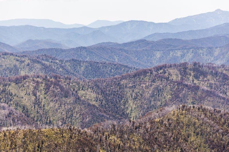 Rolling Hills av australiska fjällängar på den ljusa sommardagen, Victoria, Australien arkivfoton
