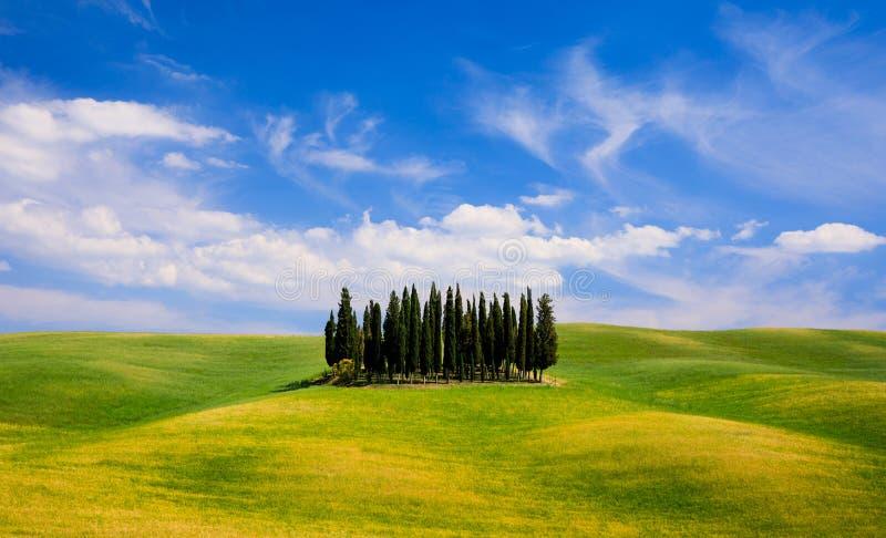 Rolling Hills, campos verdes y árboles de cipreses en Toscana, Ital fotografía de archivo libre de regalías