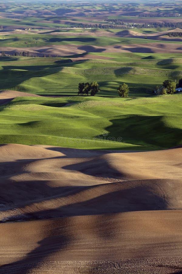 Rolling Hills dans la région de Palouse de Washington America de butte de Steptoe image libre de droits