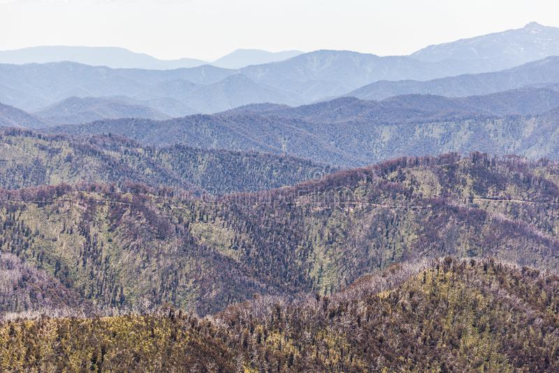 Rolling Hills de las montañas australianas en el día de verano brillante, Victoria, Australia fotos de archivo