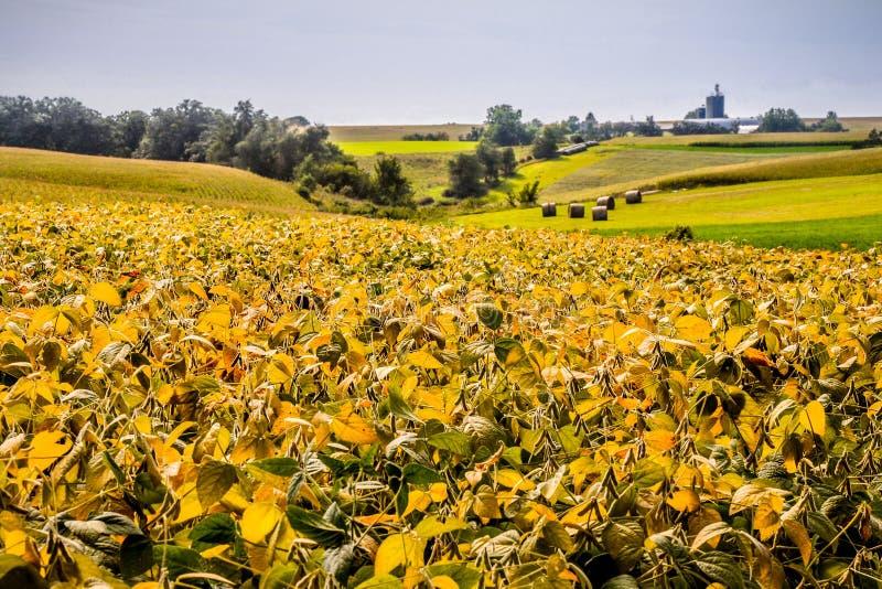 A Rolling Hills dos feijões de soja, do milho e do feno imagem de stock