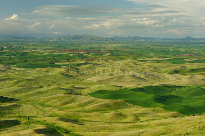 Rolling hills and fields stock images