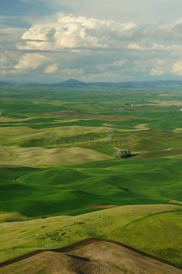 Rolling hills and fields stock image