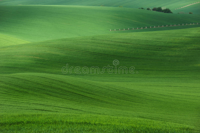 Summer rolling hills with fields of wheat and trees. Amazing fairy minimalistic spring landscape with green grass fields stock images