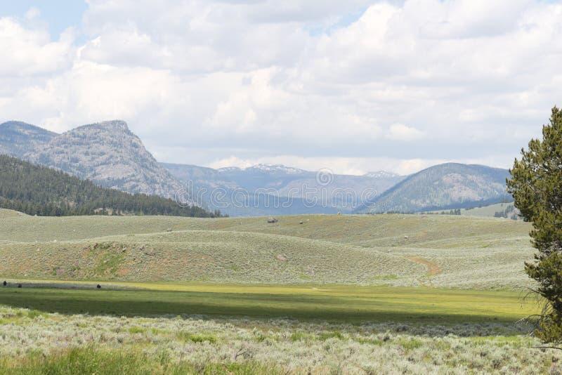 Rolling Hills im gelber Stein-Nationalpark lizenzfreie stockfotos