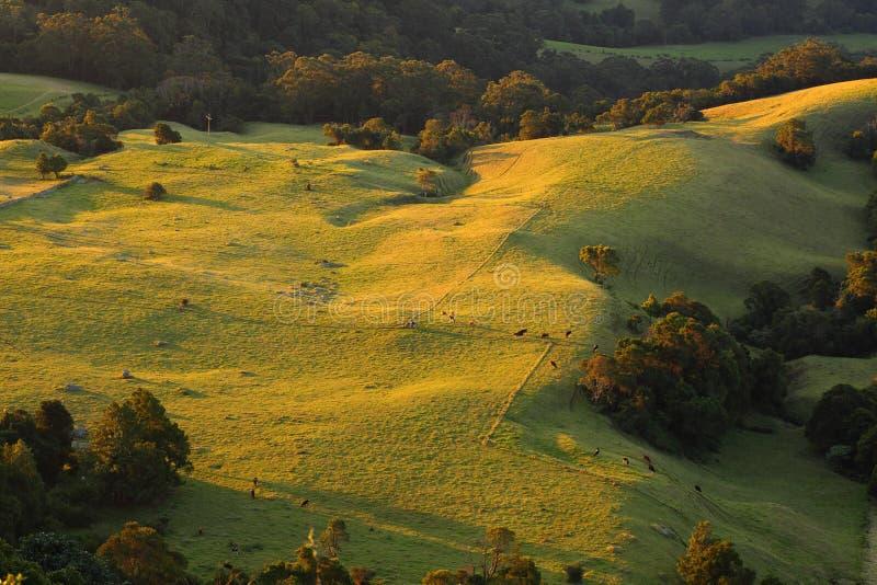 Rolling Hills på solnedgången royaltyfri fotografi