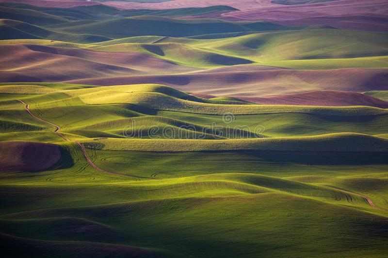 Rolling hills spring. Rolling hill in the spring, farmlands in Palouse, Washington