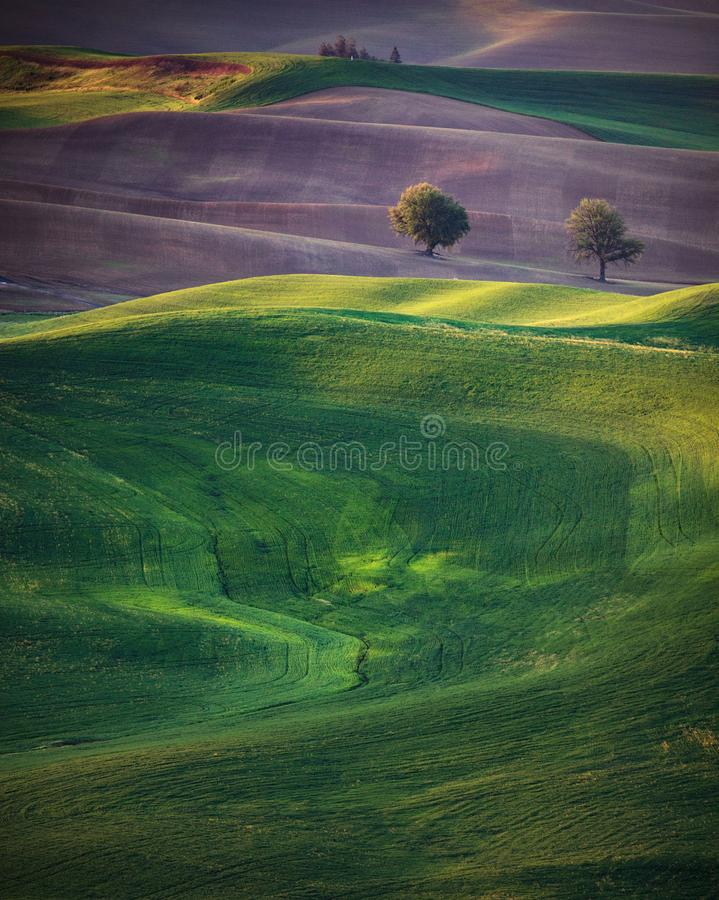 Rolling hills spring royalty free stock photos