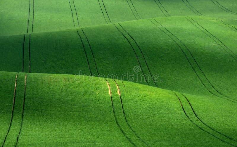 Rolling Hills verdes do trigo que se assemelham ao veludo de algodão com linhas esticar na distância fotos de stock
