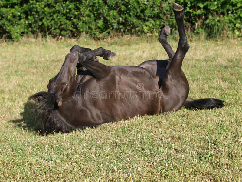 Rolling Horse stock photos