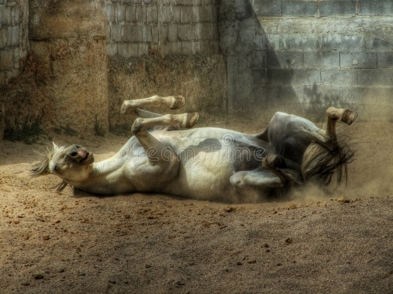 Rolling Horse royalty free stock photo
