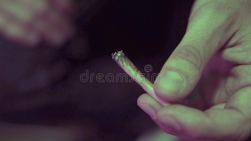 Rolling joint with weed buds close-up. Smoking culture in the world royalty free stock images