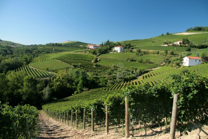 Rolling wineyards stock photos
