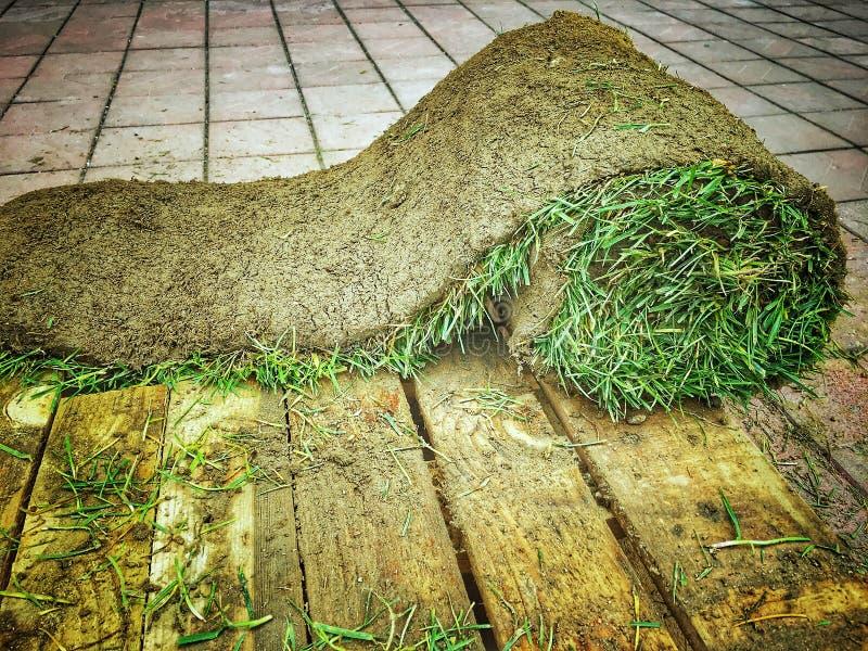 Rollo de la alfombra de la hierba imágenes de archivo libres de regalías