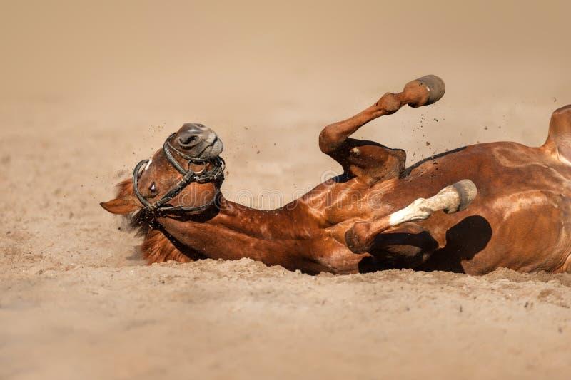 Rollo divertido del caballo imagenes de archivo