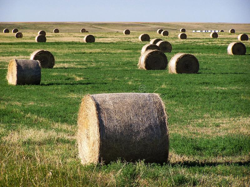 Rolls av hö i grönt fält arkivfoto