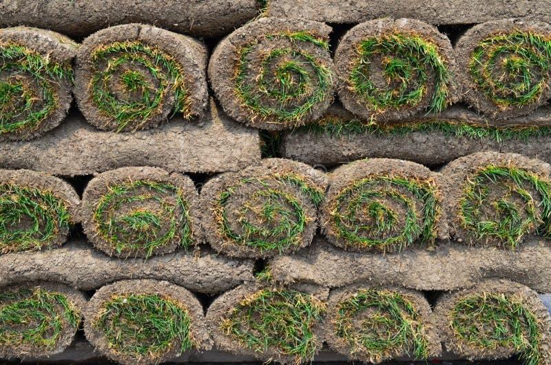 Rolls de gazon pour la pelouse photographie stock libre de droits