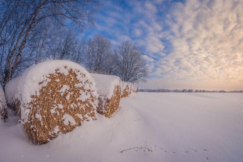 Rolls de la mentira del heno en un campo en invierno en la puesta del sol imagen de archivo