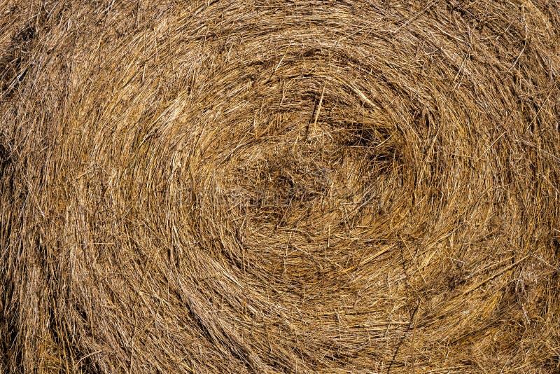 Rolls di paglia per alimentare il bestiame immagini stock libere da diritti