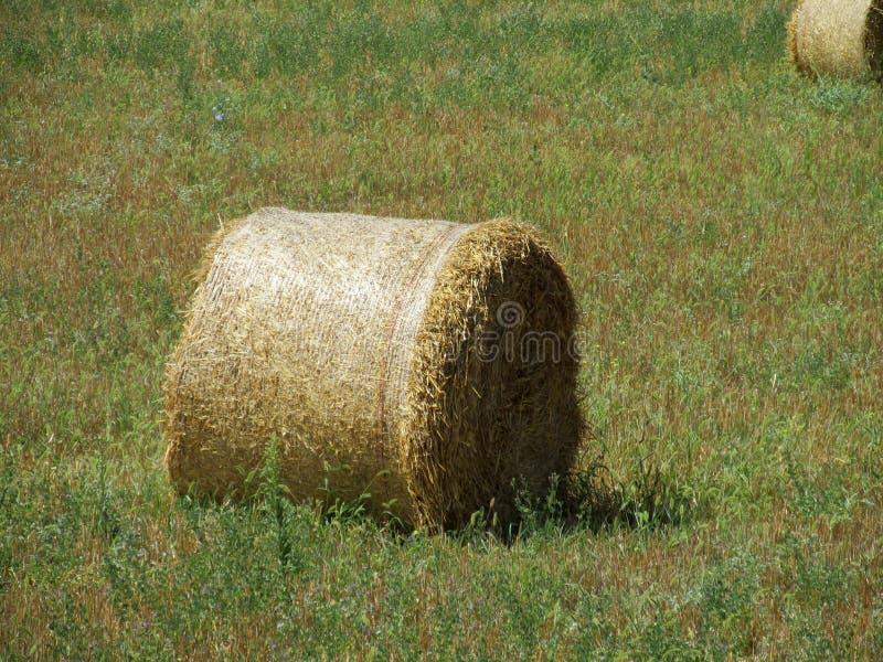 Rolls do feno no campo verde imagem de stock royalty free