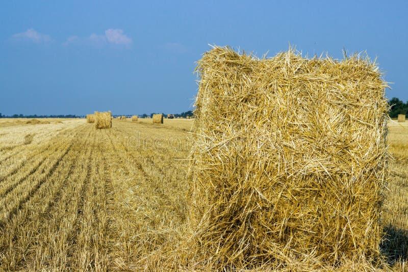 Rolls dos monte de feno no campo Cenário da exploração agrícola do verão com o monte de feno no fundo do por do sol bonito Comcep imagem de stock