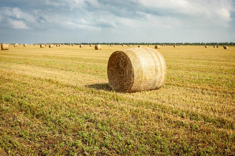 Rolls of hay bales in a field. One large roll in the foreground. Agriculture field in autumn, countryside, crop, dry, farm, golden, harvest, land, landscape royalty free stock images